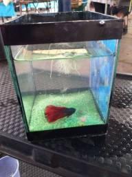 Vendo aquário com BETTA