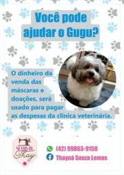 Você pode ajudar o Gugu?