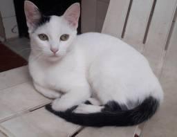 Título do anúncio: Doação de filbote de gato