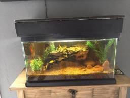 Vendo aquário completo (Conforme foto)