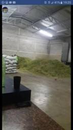 Agrovidarural silagem de milho