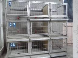 Gaiolas usadas para galinhas