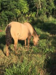Cavalos Crioulos Vendas permanentes de potros e coberturas