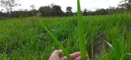 45 hectares em Acorizal