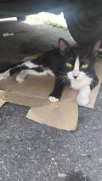 Gato filhote para adoção RJ