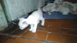 Gatinhos de extimação