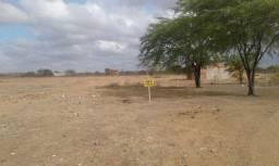 Terrenos a venda