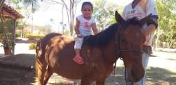 Mini cavalo MM