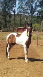 Cavalo manga larga machado