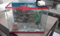 Conjunto de aquários