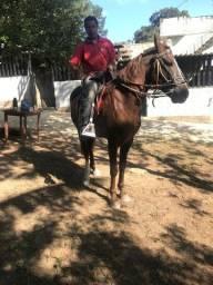 Cavalo de charrete e sela argentino com paulista