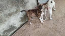 Estou doando essas duas cachorras.