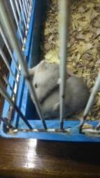 Ratos Twister