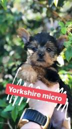 Yorkshire micro