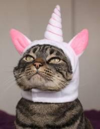 Capuz (chapeu) para o gato - Unicornio
