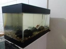 Aquario 60 litros completo Abaixo do preço