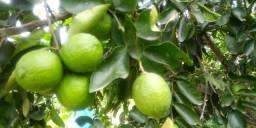 Frutas, Hortaliças e Verduras Orgânicas (Atacado e Varejo) Sanharo e Região