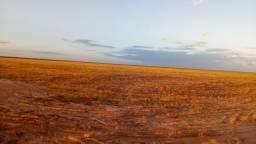 Fazenda com 11 mil hectares no Maranhão, para lavoura e Pecuária