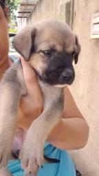 Tenho essa cachorrinha pra doar ela precisa de um lar com amor e carinho ?