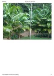 Sítio em Ibirama, SC 12 hectares