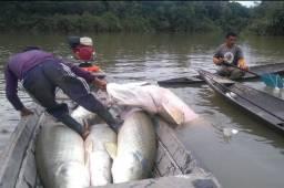 Fazenda na amazônia 913.000 hectares