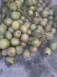 Vendo cocos verde