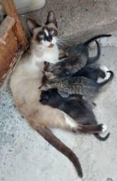 Título do anúncio: Doação de filhotes de gatos