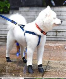 Sapato botinha para pet de silicone a prova d´água 4 patas