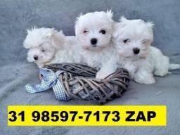 Canil Top Cães Filhotes BH Maltês Shihtzu Basset Pug Yorkshire Beagle Fox