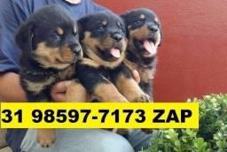 Canil Filhotes Cães Alto Padrão BH Rottweiler Pastor Boxer Labrador Akita Golden