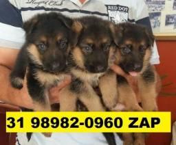 Canil Líder Cães Filhotes BH Pastor Golden Akita Labrador Boxer Chow Chow Rottweiler