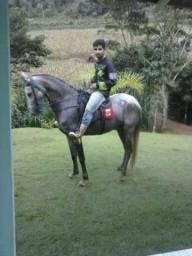 Vendo égua mangalarga imformada
