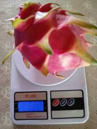 Frutos e mudas de pitaya