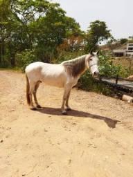 Título do anúncio: Vendo cavalo mansinho