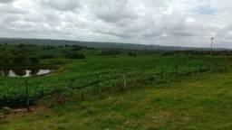 Fazenda 1090ha/ Soja e pecuária/Bagé