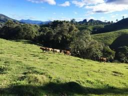 Fazenda/Terreno/Sitio na Serra Catarinense/Francisco Krtiscka Corretor De Imóveis