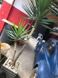 Vazo de Plantas