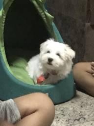 Casinha d cachorro
