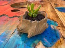 Suculenta orelha de Shrek com vaso de cimento em forma de tronco