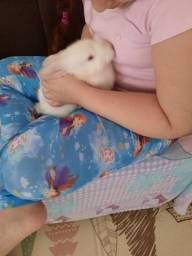 Vendo um lindo coelhinho