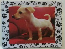 Produtos com foto do seu Pet Personalizado