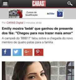 Canil dos Famosos / Canil Leal Maia nas Maiores Revistas/ Lulu / Spitz