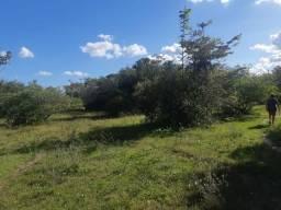 Fazenda próximo de Pinheiro