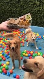Hotel e creche para cães
