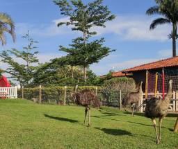 Casal de Emu formado
