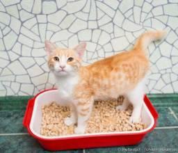 vendo granulado higiênico para gatos e roedores