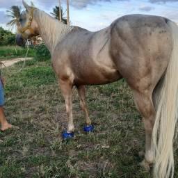 Cavalo de direita vai fazer 6 anos