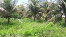 Lote irrigado e produzindo