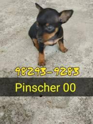 Pinscher OO