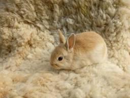 Mini coelho Hermelin